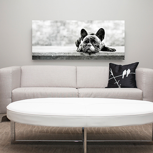 Process | Gallery Ready Artwork | Mutt Love Photography