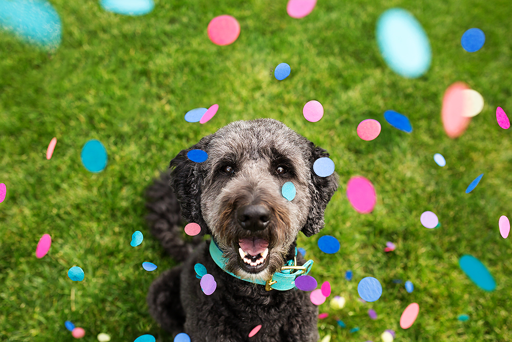 Mutt Love Has a New Look + Photo Session Giveaway!