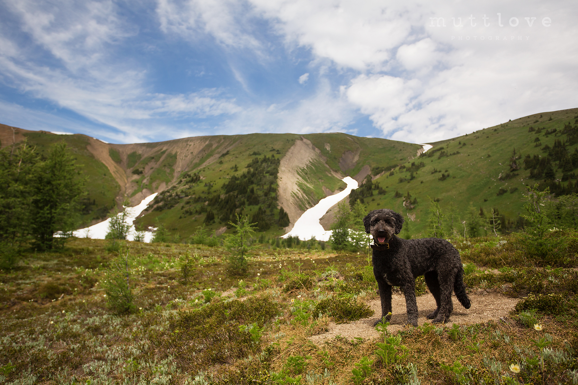 Adventure Travel with your Dog – Diana Lake Lodge Hike